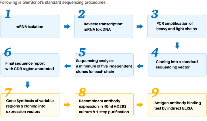mAb sequencing procedure